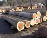 木材有効利用